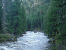 Narrow, swiftly moving Selway River flowing through a dense cedar forest